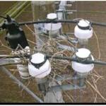 写真-3 鳥の巣状況