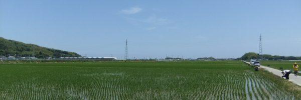 小松島市内のほ場整備が済んだ水田